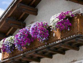 Jak dobrać kwiaty na balkon?