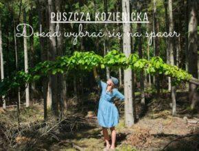 Perełki województwa mazowieckiego – Puszcza Kozienicka