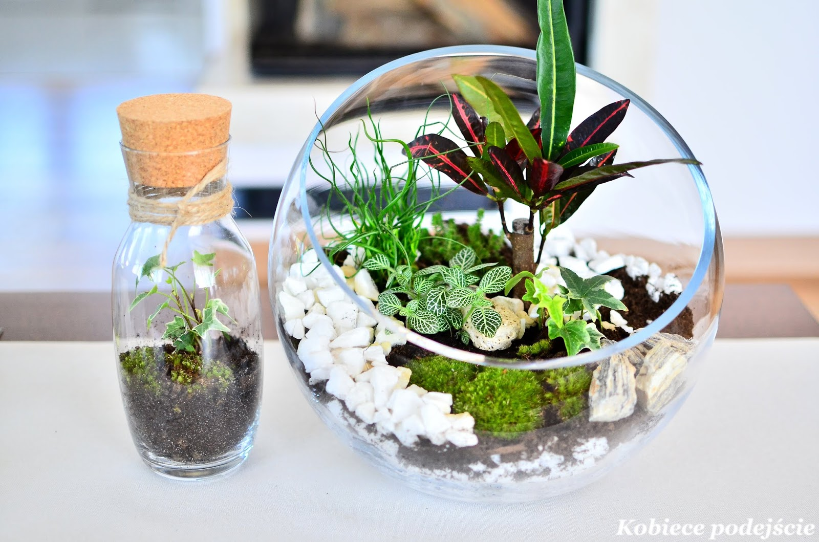 Rośliny w szkle – zakładanie krok po kroku