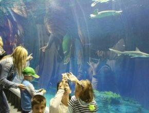 Oceanarium Gdańsk największym oceanarium w Polsce