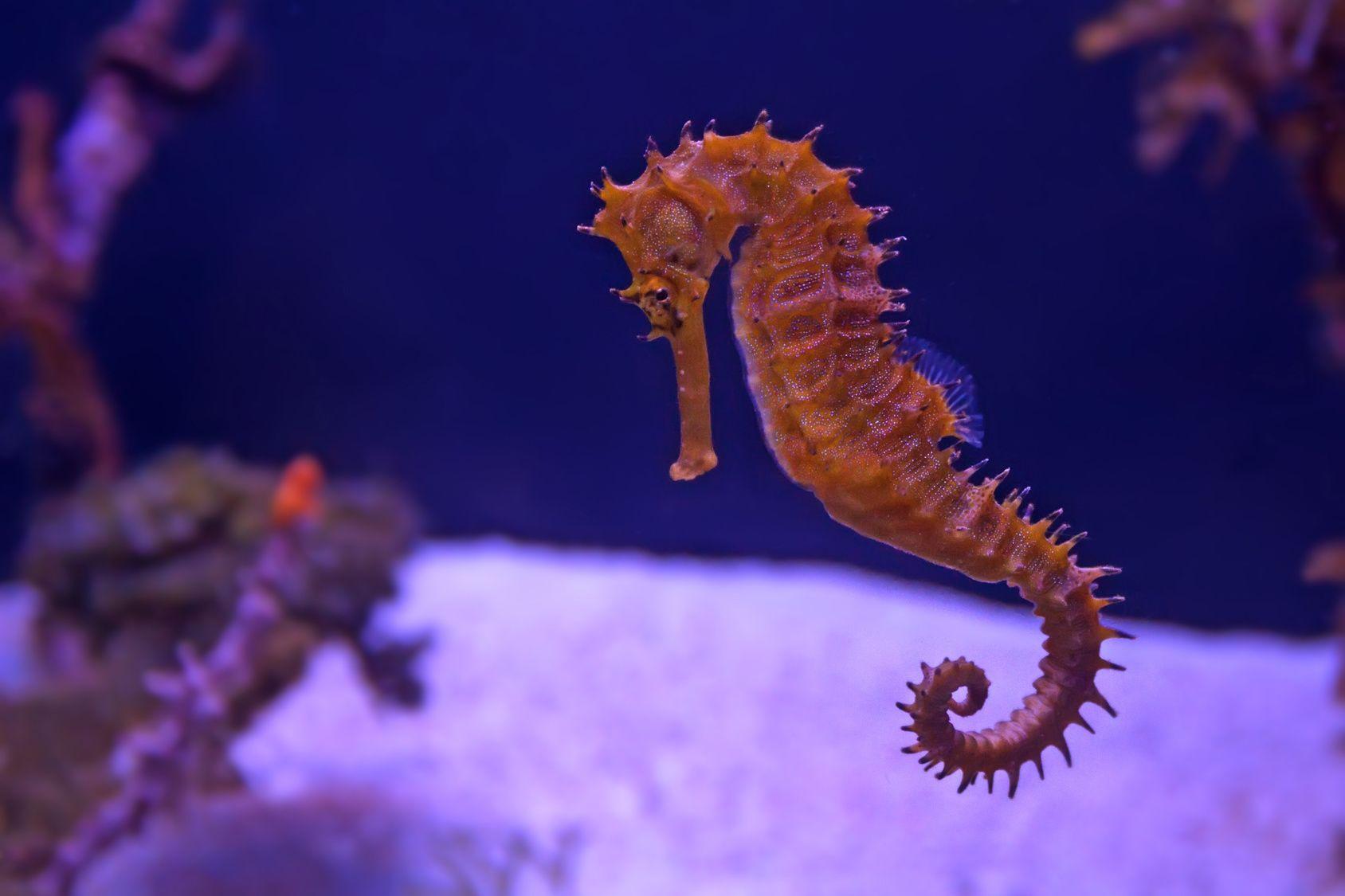 Oceanarium Kołobrzeg – atrakcje