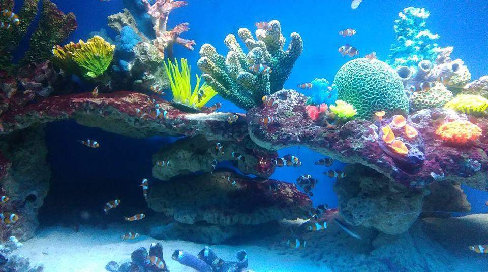 Oceanarium Międzyzdroje – atrakcje