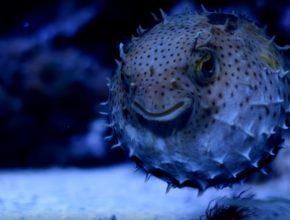 Oceanarium Gdynia – miejsce dla małych i dużych miłośników przyrody