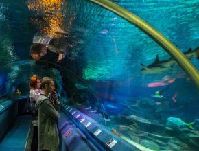 Oceanarium Afrykarium Wrocław – atrakcje i ceny