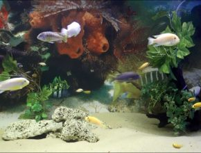 Oceanarium Delfin House Łeba – atrakcje