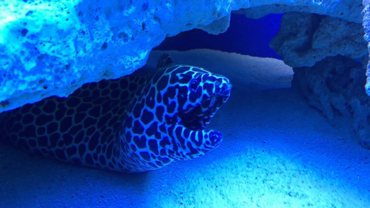 Oceanarium Kielce – tu zobaczysz ryby z całego świata